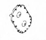 U-47773428 GEARBOX